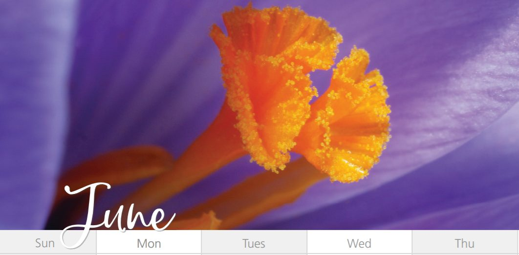 Picture of purple flower with the month of June