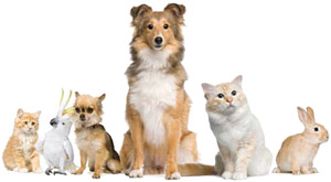 CARESTREAM Veterinary Solutions
